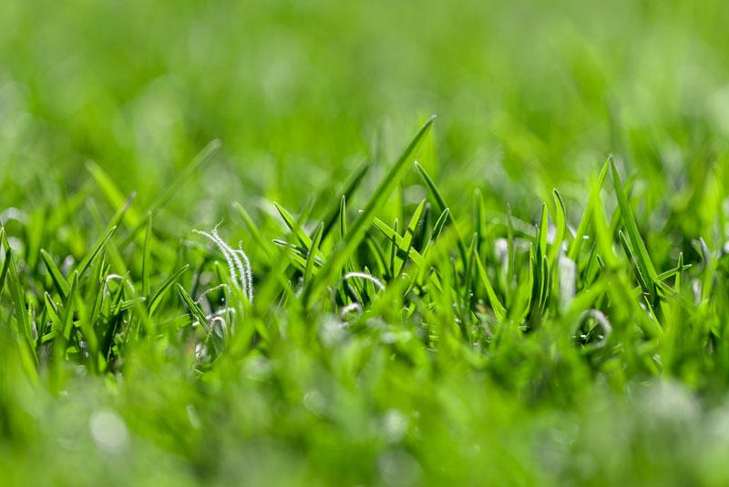 kenda kikuyu grass lawn