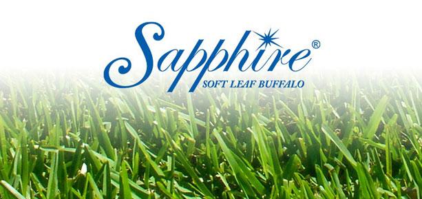 sapphire soft leaf buffalo