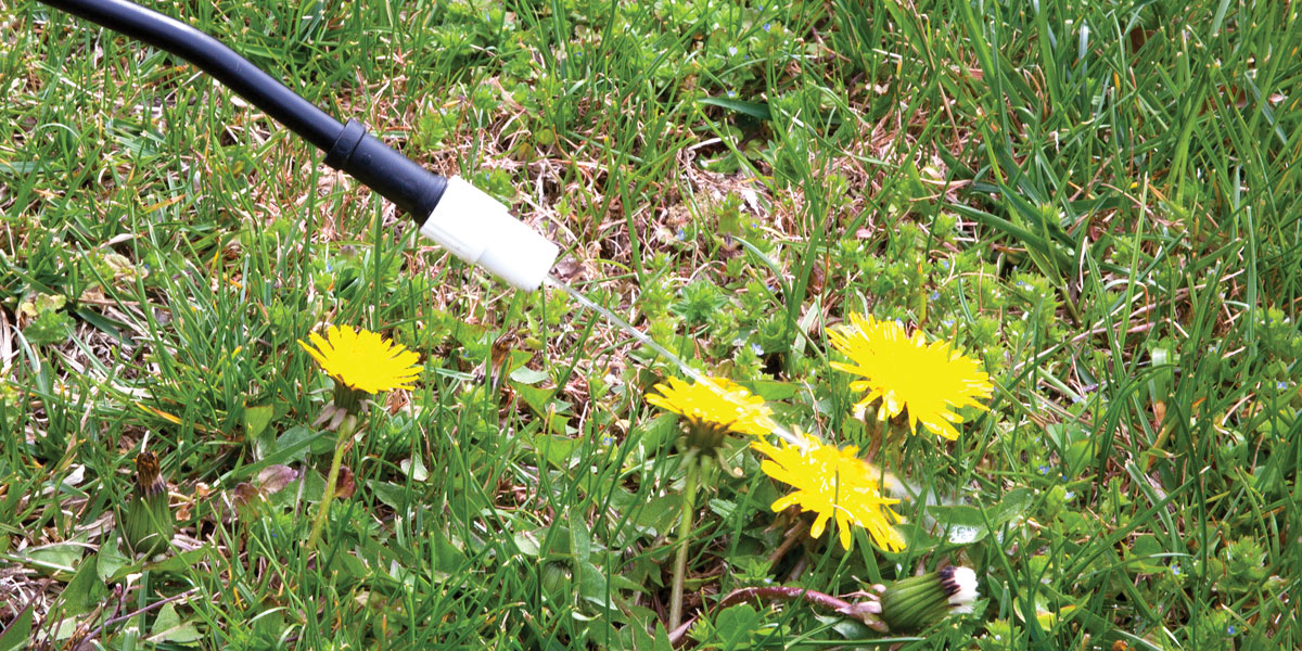 weed spaying with glyphosate