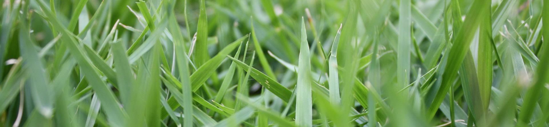 jari blu turf and lawn