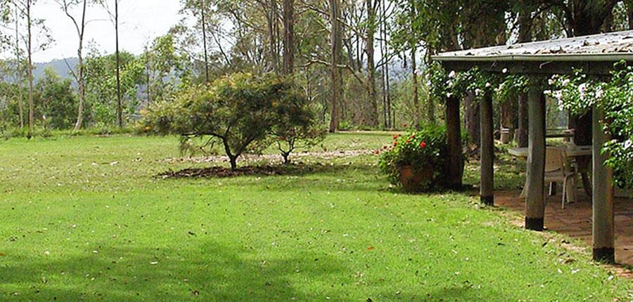 Nara native zoysia turf