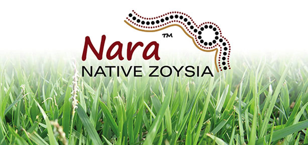 nara native turf australias most beautiful lawn