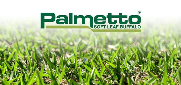palmetto soft leaf buffalo