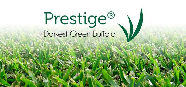 prestige darkest green buffalo