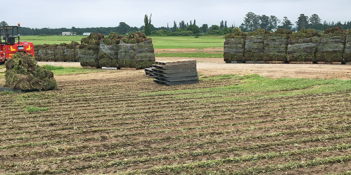 turf farming by mifsuds