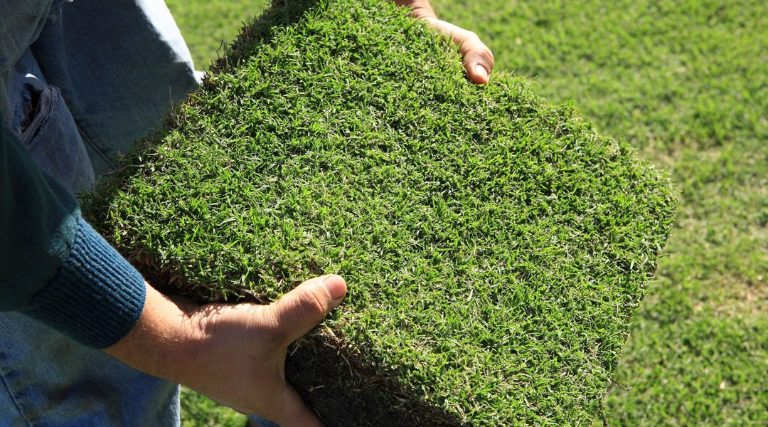 TurfBreed expands its 10-year association with Native Zoysia