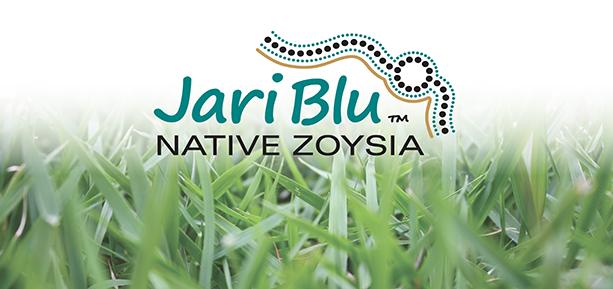 jari blue native zoysia turf and lawn